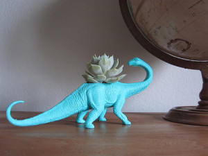 Dinosucculent